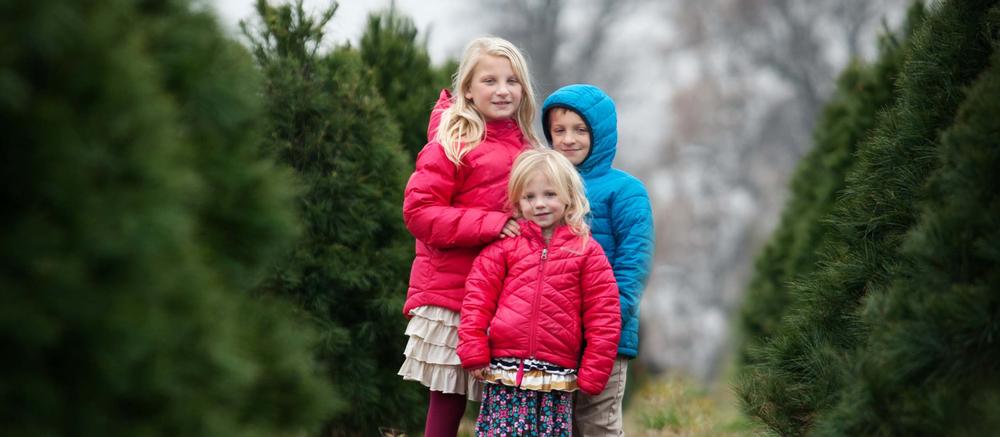 Christmas_trees.jpg