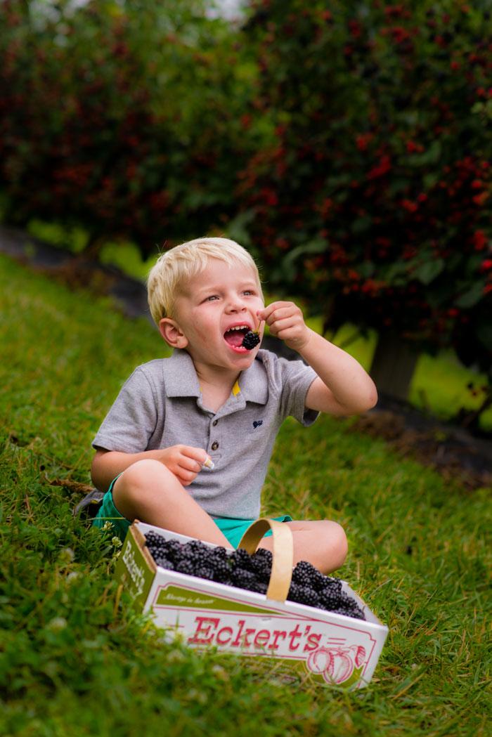 Jack-eating-blackberries.jpg
