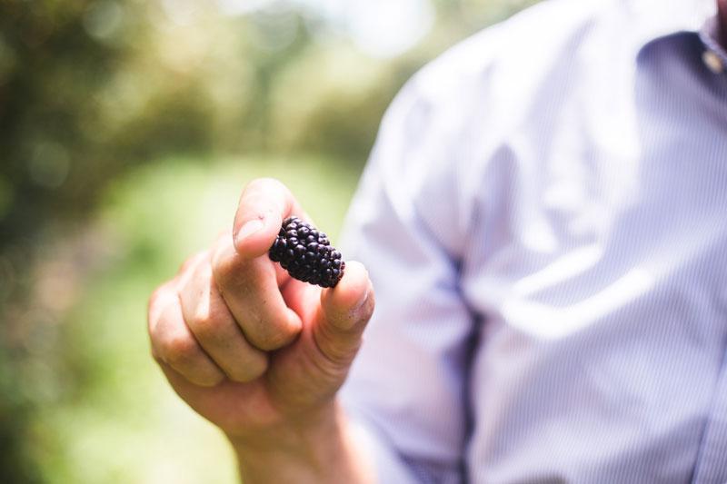 Notes from the Farm---Eckert's-Blackberries-1.jpg