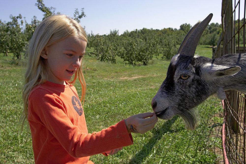 Girl-feeding-goat-3.jpg