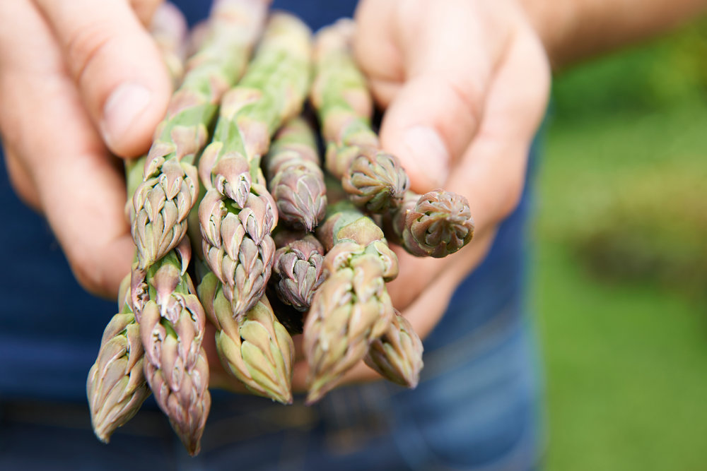 harvest asparagus.jpeg
