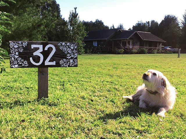 Mi perro favorito y el cartel que pinté para la casa en mi lugar favorito 🤞🏼💙✨#holateamo #sursiempresur #lettering #handpainted #craftchile #analogueillustration #natureillustration #mistico #dogsaremensbestfriend