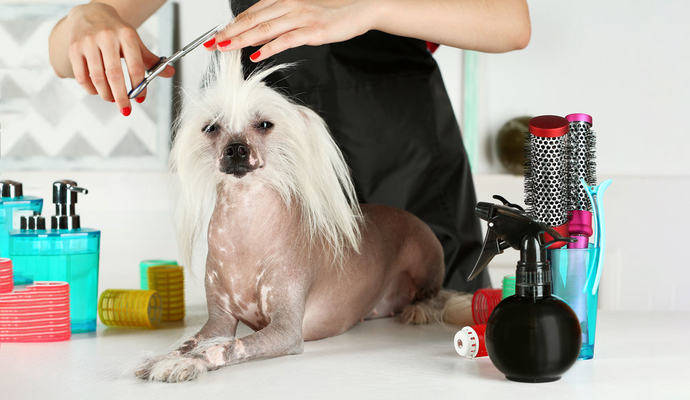 Grooming Tailored to   Your Pet's Needs