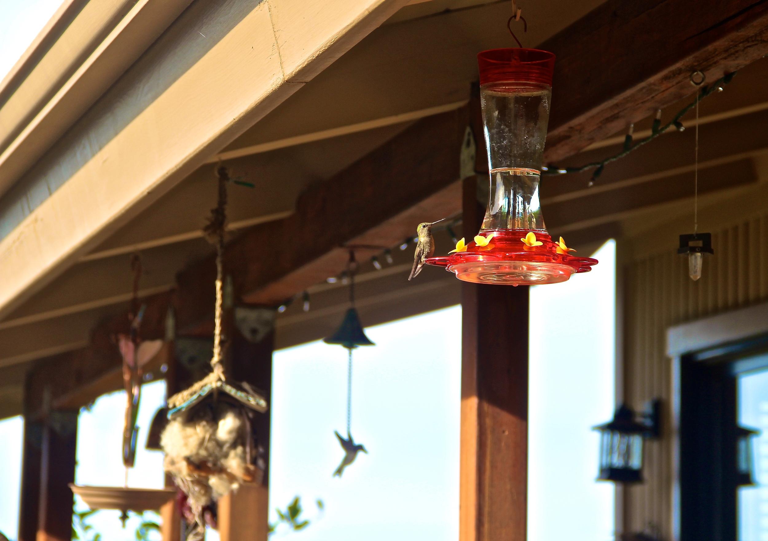 san jose california bird feeder