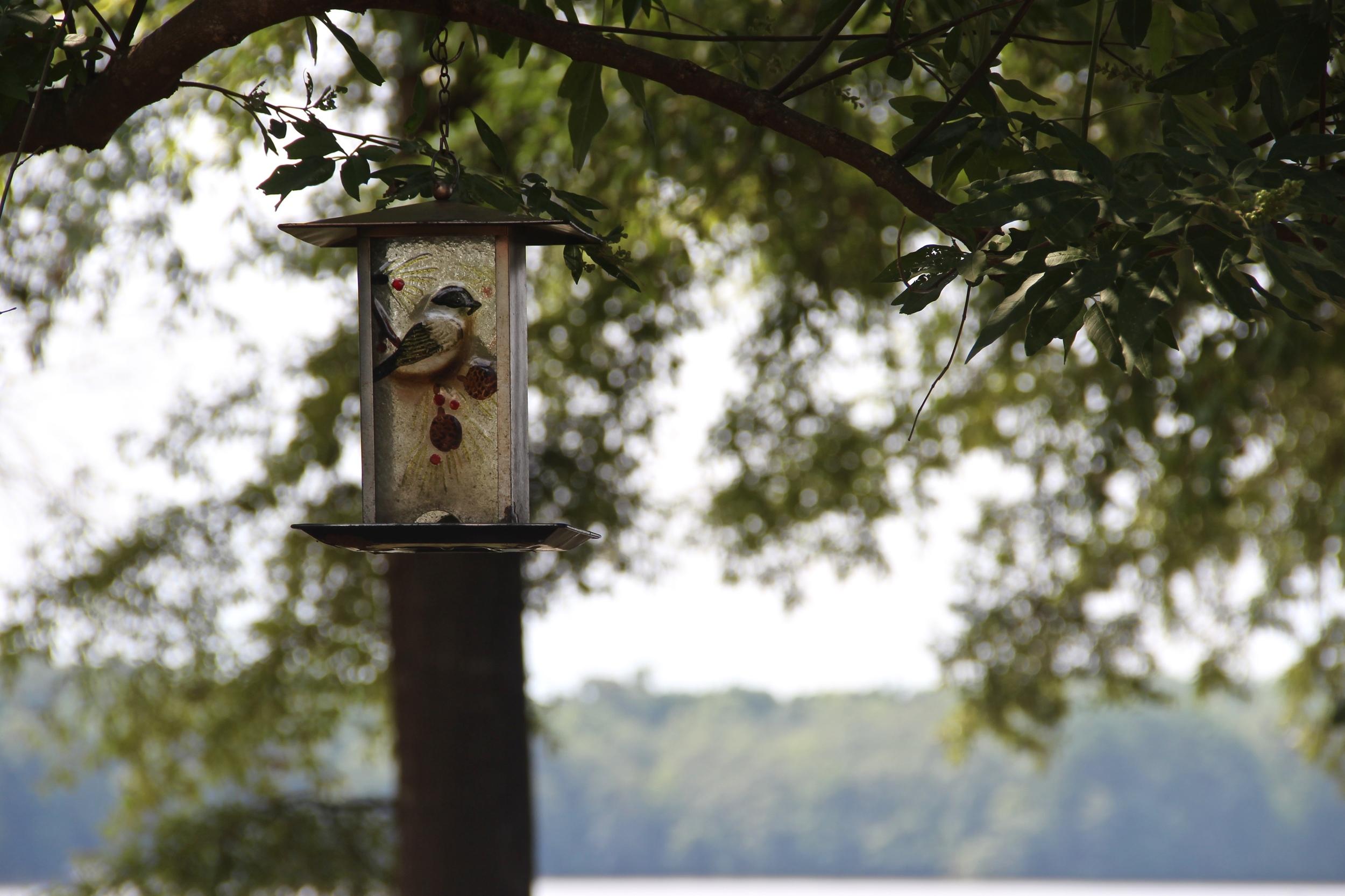 nature bird feeder