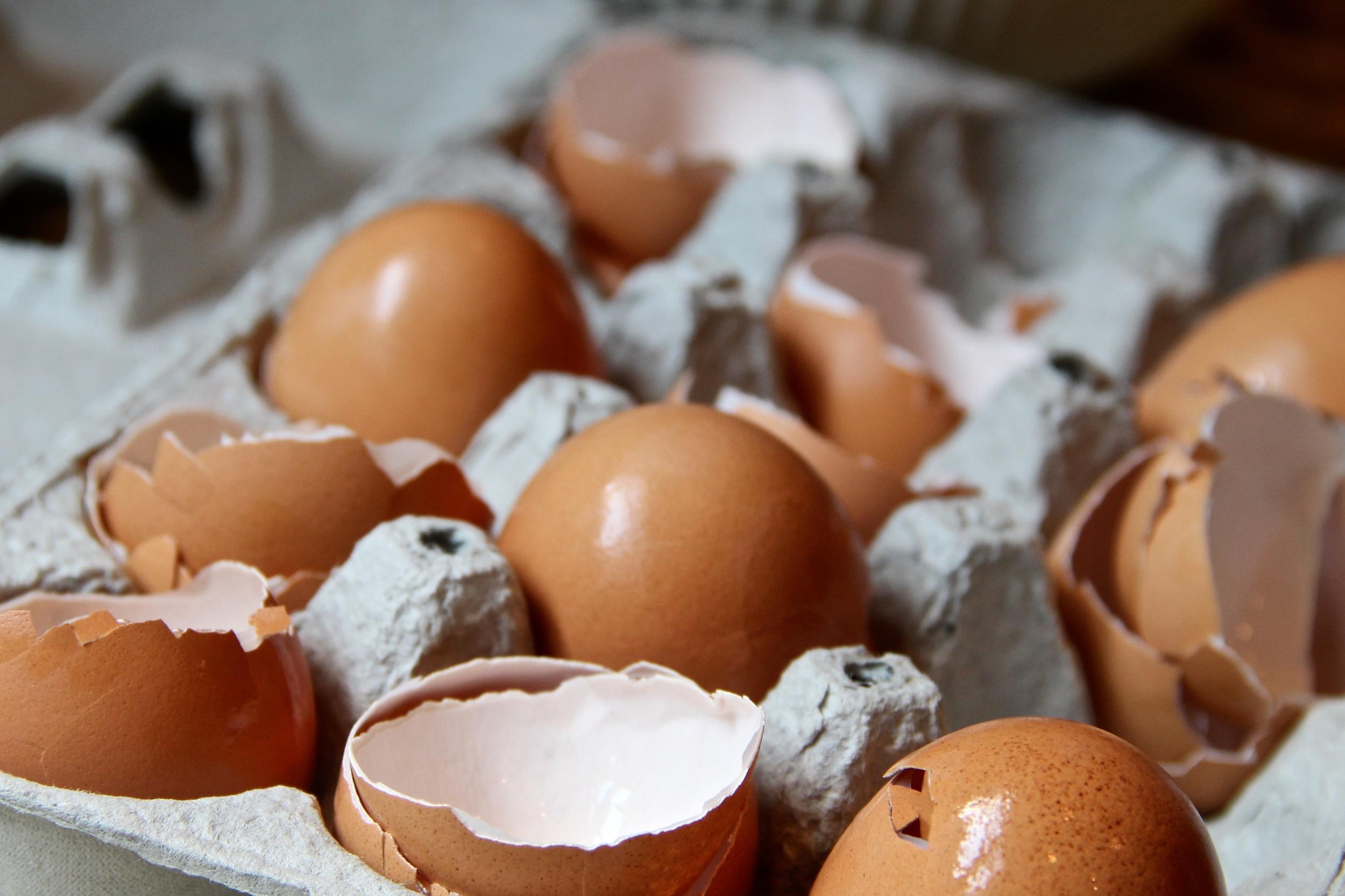 cracked egg shells