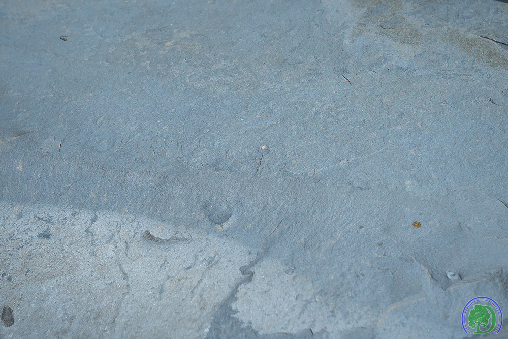 Flagstone_Closeup