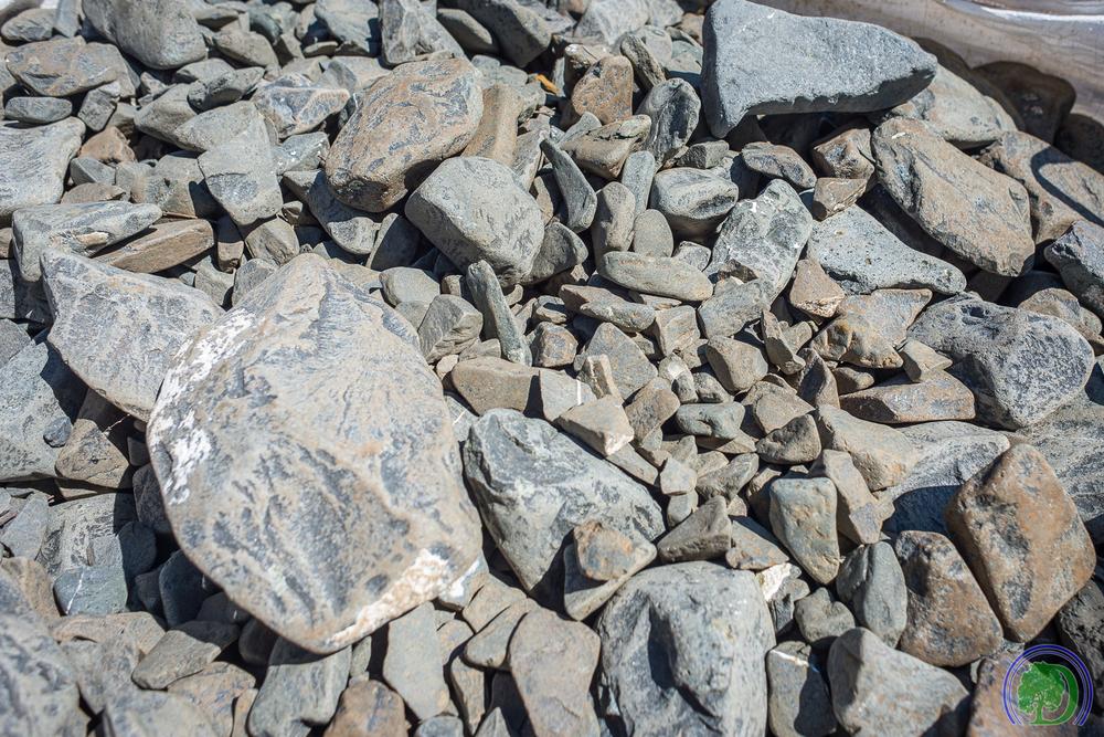 Texas Beach Pebble