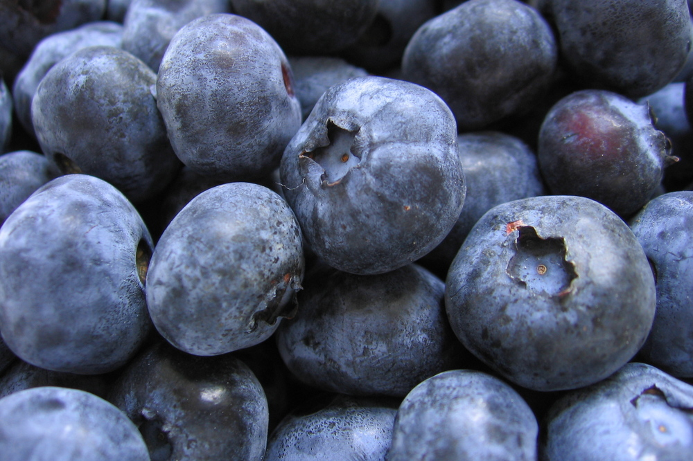 Bunch_of_blueberries.jpg