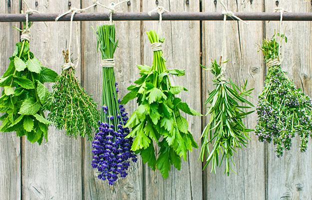 herbal_tea_herbs.jpg
