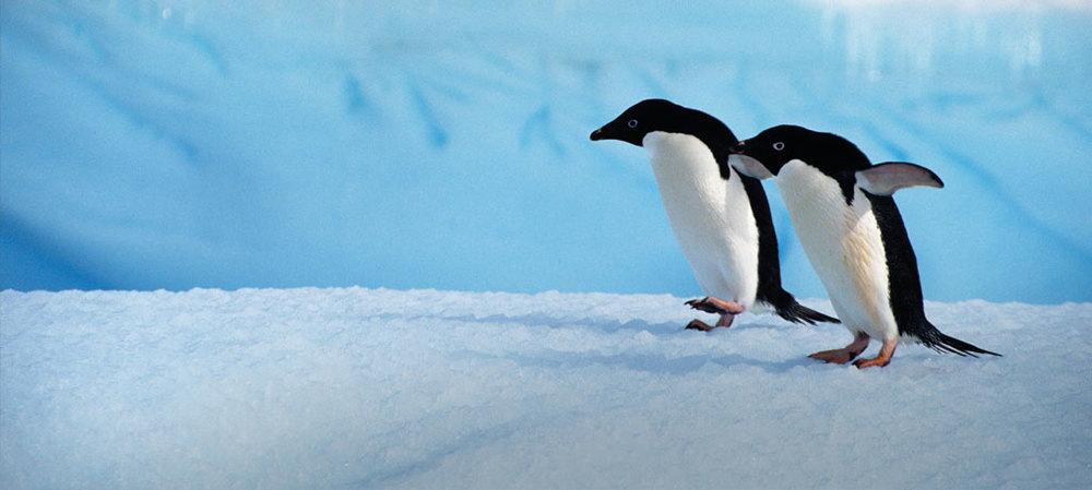antarctica-penguins-family-a.jpg