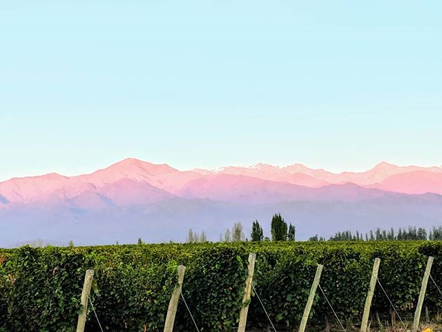 Gorgeous stay and delicious sips! #mendoza #zenluxurytravel #wine #malbec #mountains #travel #luxury #vacation #salentein