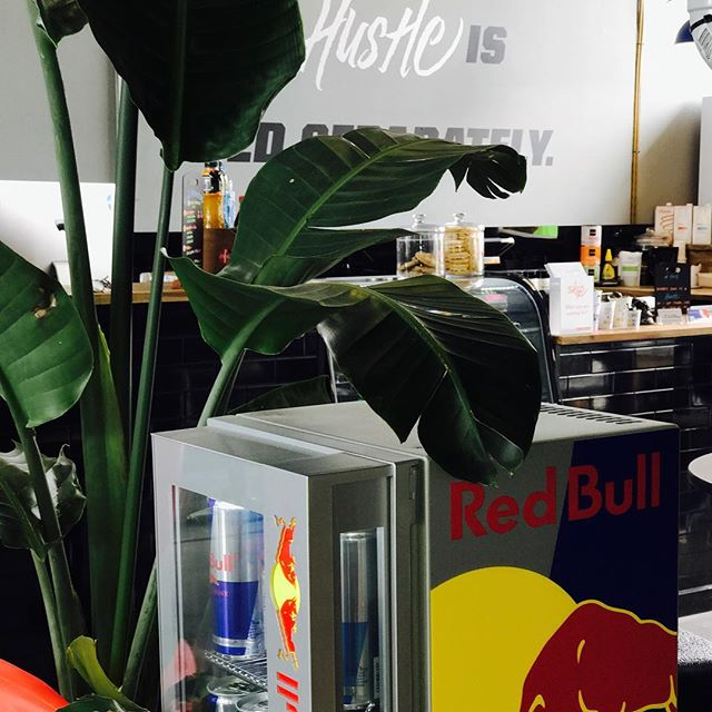 Friday Feels @dreamspaceoffice thanks to @redbullau for the wings. #redbullgivesyouwings#dreamspaceoffice#ourhouseisyourhouse #hustle #hustleharder