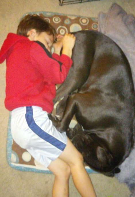 Comet napping with 6 year old Andrew.