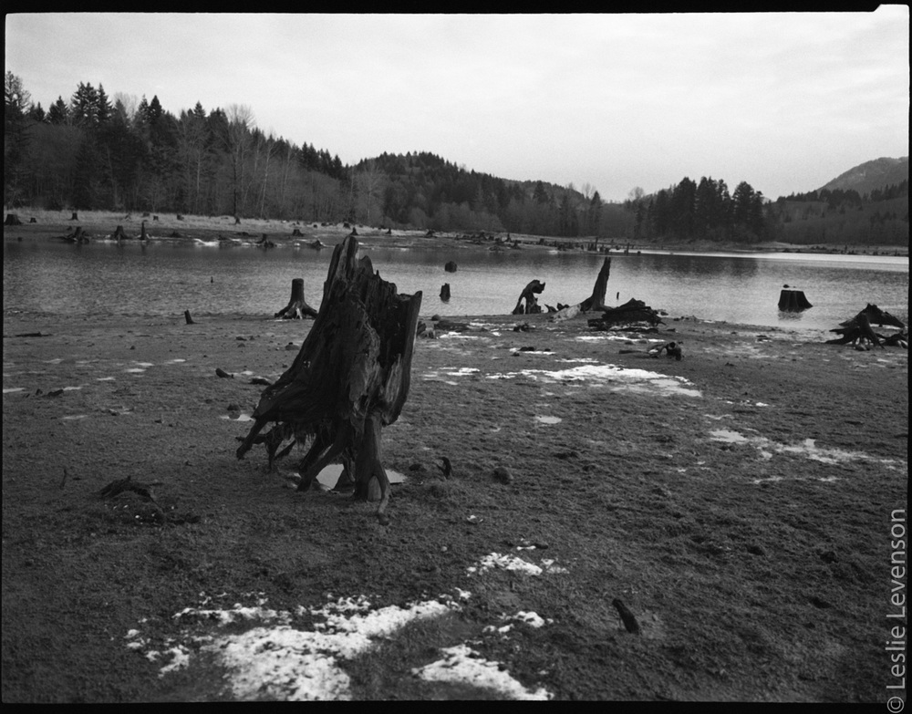 stumps_at_alder_lake.jpg