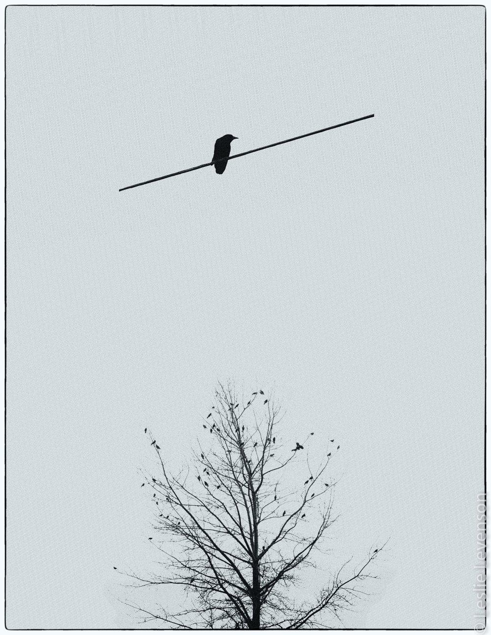 crow diptych blue tint.jpg