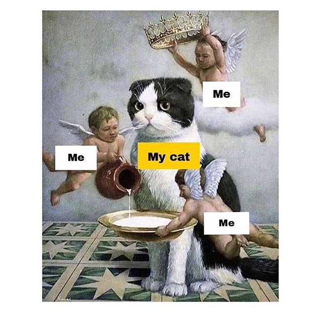 100% me 👑 via @artmemescentral #lol #catsaregods