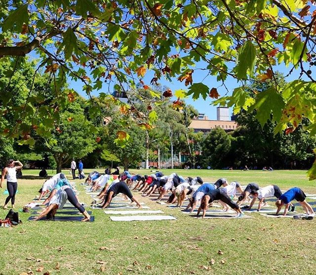 We're getting down at @unimelb tomorrow from 2:30pm - 3:30pm on south lawn for university mental health and wellbeing day. Get amongst the commUNIty vibes and join us on the mat 🤙🏽 #studentwellbeing #yoga #gravityinitiative #mindfulness #unimelb