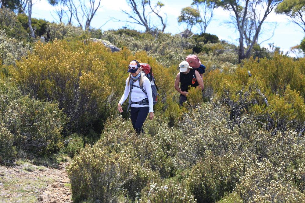 Wilderness Tasmania Walks Thousand Lakes Lodge