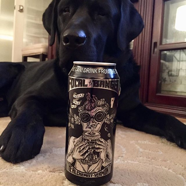 We just got some @alch3mistb33r #focalbanger  Get some before it's gone. Labrador not included.