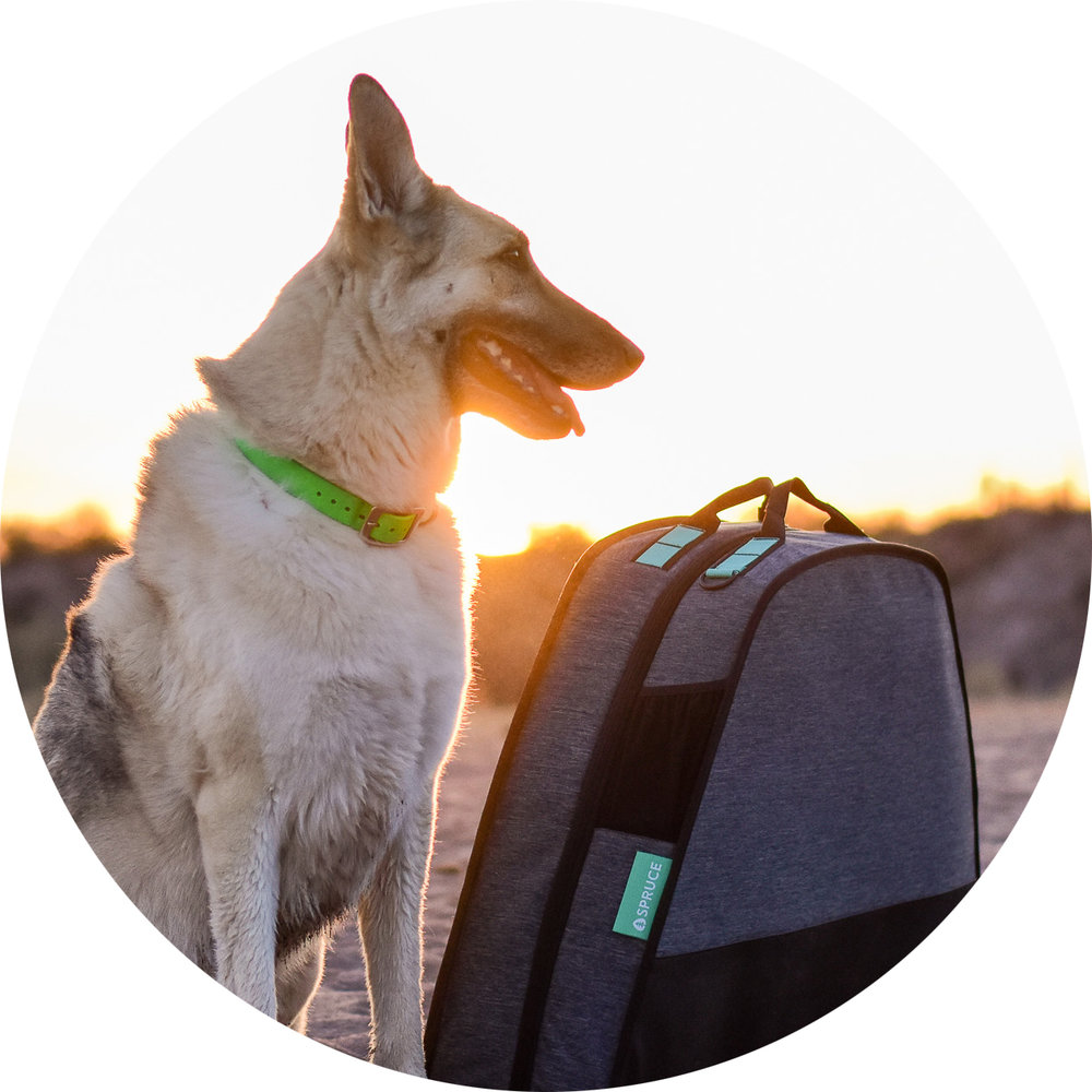 """- """"Comfort and portability are the two main features of the Spruce pup travel bed. I'm blown away by how well made this bed is and will never be caught traveling with out it!""""- @dustydesertdogs"""