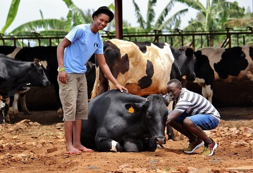 Students with Cows in Farm