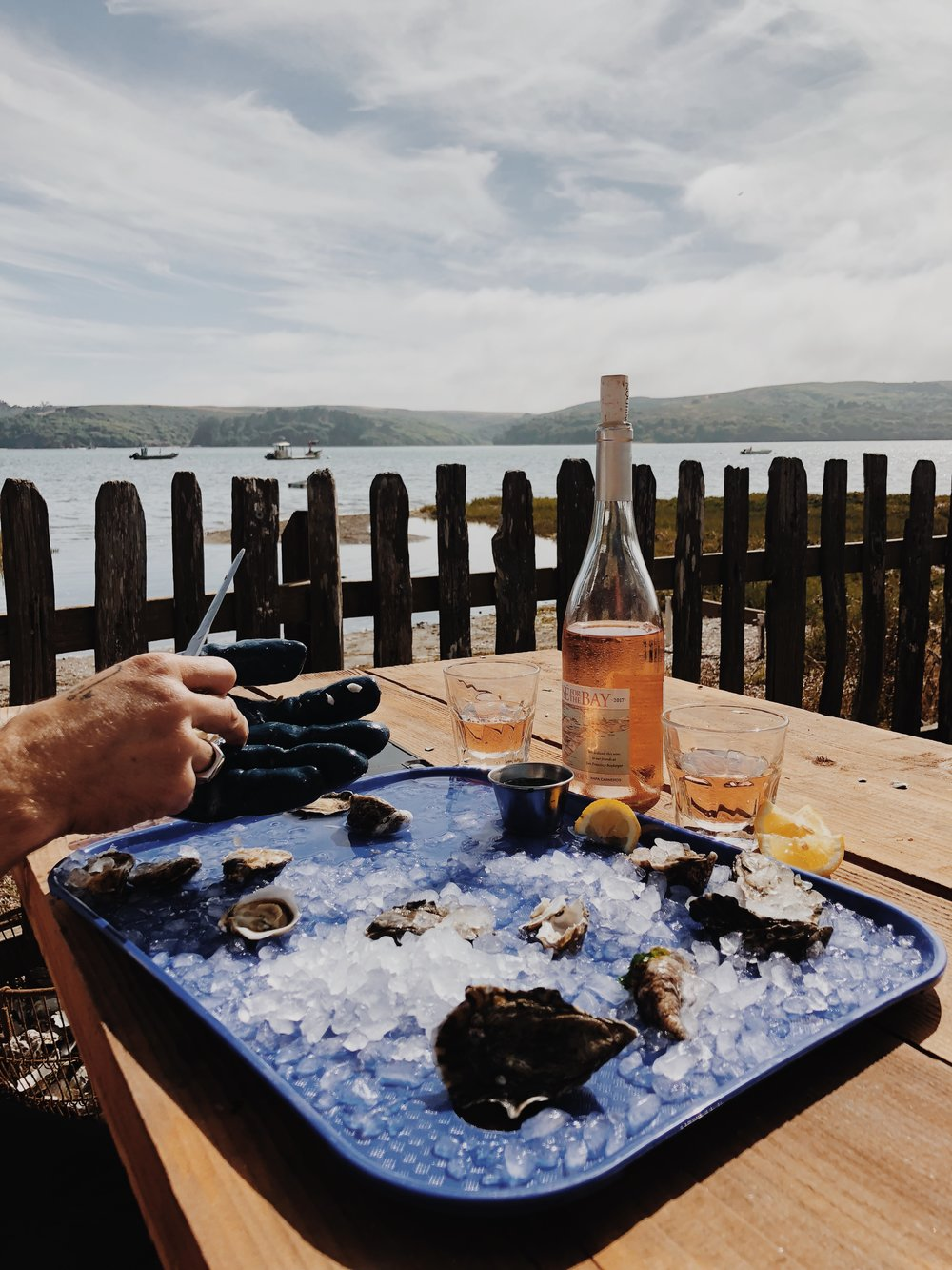 Oysters tomales bay - traveling photo bus.JPG