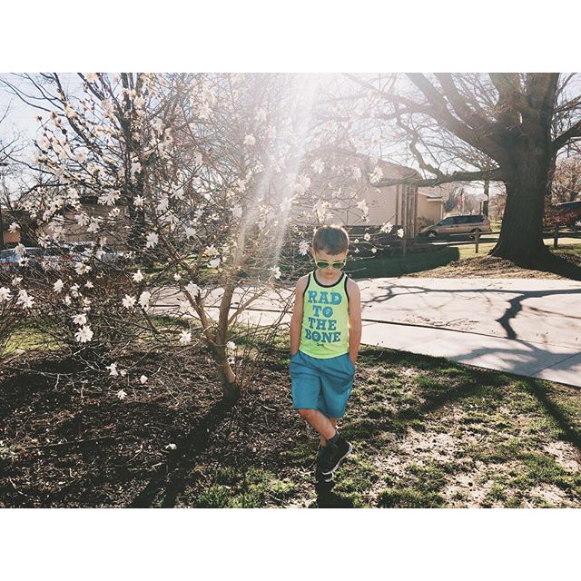 The SUN came out today! ☀️🙌🏼 It really wasn't hot enough for shorts but my tank top lovin dude had to wear this for a little while (until he got too cold and put on a sweatshirt) ❤️ . . . #365daysofmondays #spring #tanktop #instakids #vsco #thatsdarling #radtothebone #clickinmoms #iphoneography #documentyourdays #momentsinthesun