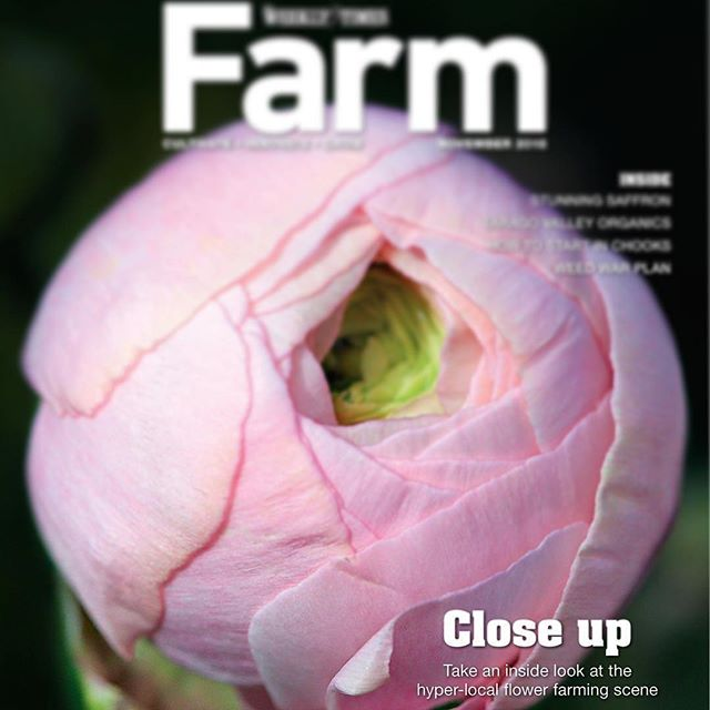 GOOD SEEDS | We're super thrilled to have one of CB's members featured in this week's @farmmagazine_ in the @theweeklytimes ~ farming journalism doesn't get much better! A huge congrats Hayley  @therookblooms ~ Danielle & Co. 🐝😊🌿🌸✨ #sowinggoodseeds #consortiumbotanicus #beefriendlyflowers #sustainableflowers
