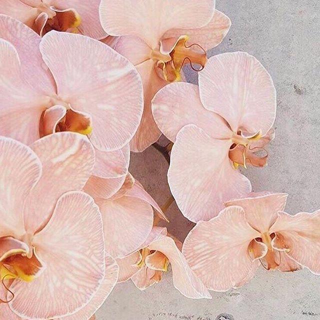 Colour Palette // #kindcollective #kindinspired via Pinterest