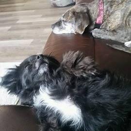Olive & Lola