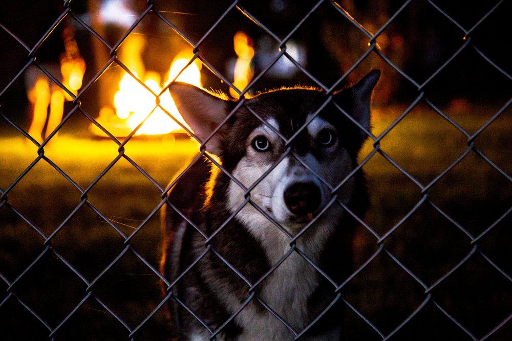Wolf Dog Final.jpg