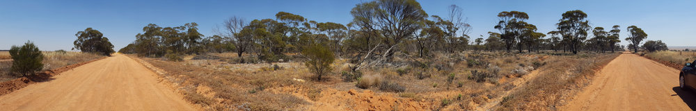 Taller Ecalypt woodland to the north (right side of the image) transitioning to mallee scrubland (left side of image).