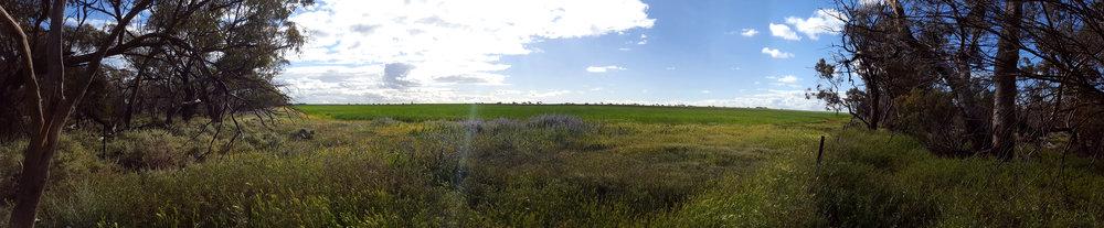 Wheat field adjacent to the West Perenjori Reserve