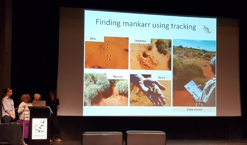 Collecting data on mankarr foraging, burrows, scat and more!