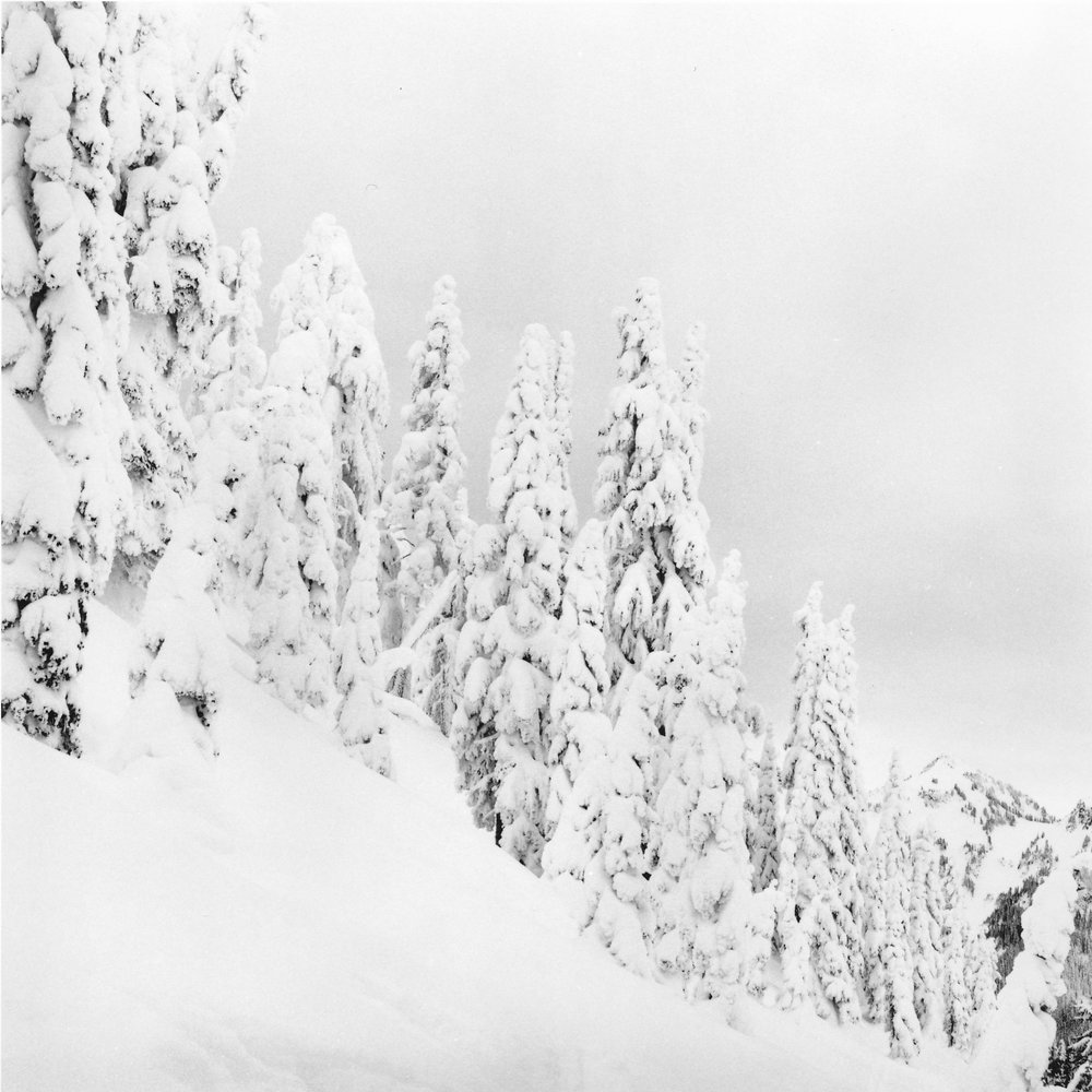 Monika (@DrMarsRover), Silence, Paradise, Mt Rainier, Ilford HP5+ film.