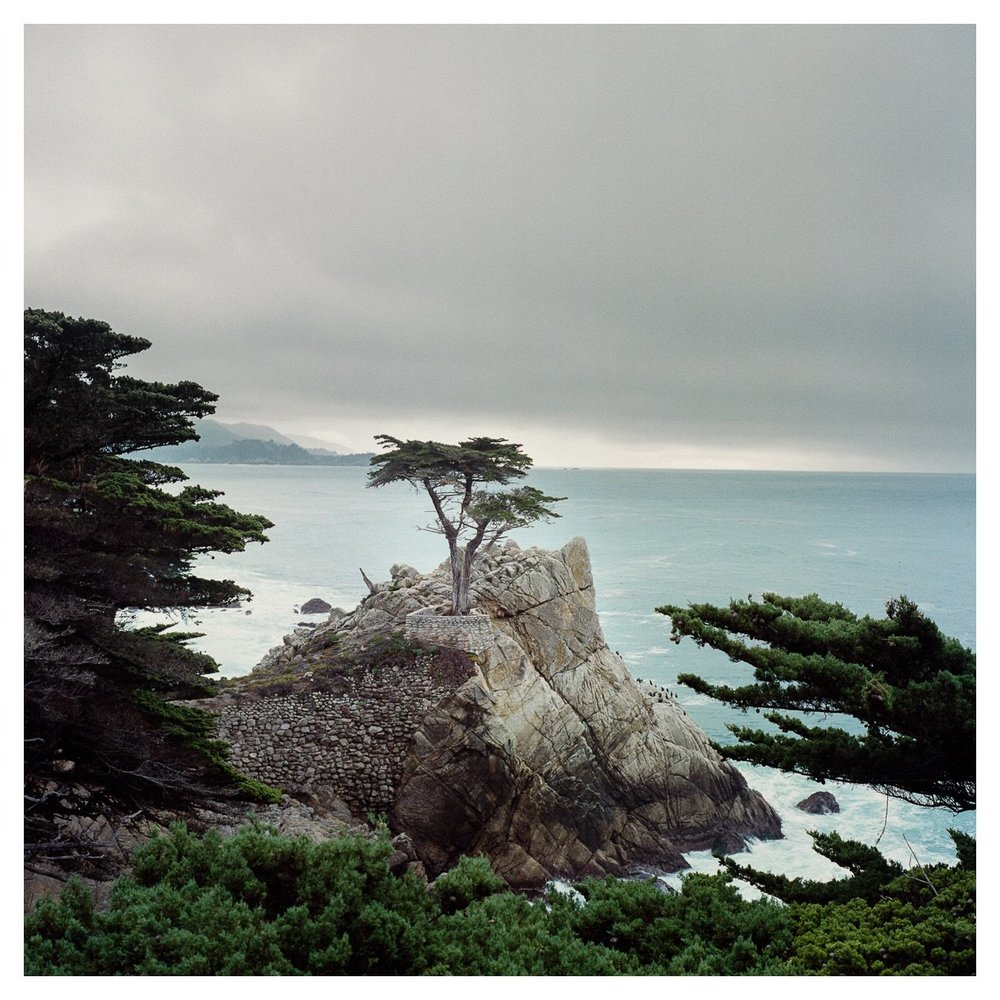 Nick Trujillo,  Lone Cypress, Pebble Beach, CA , Fuji Reala 100 film, developed using an Arista C-41 kit.