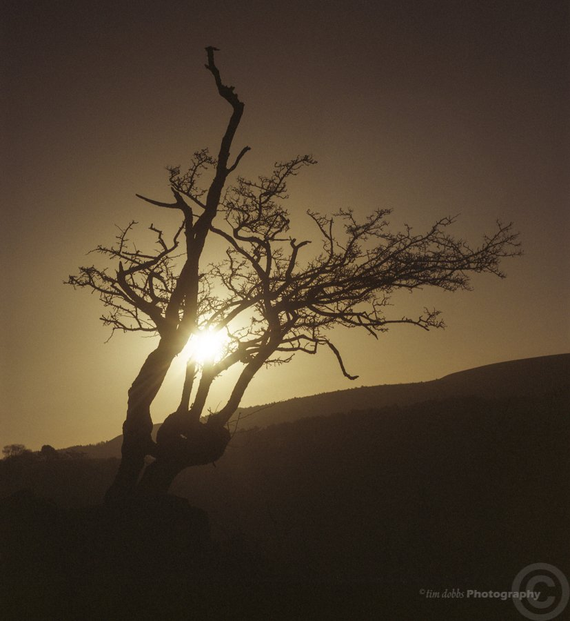 Tim Dobbs, A Tree At Sunset, expired Fuji NPS 160 film.