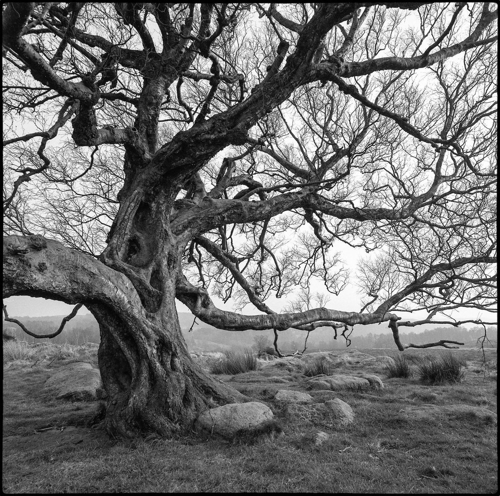 Adi Taylor, Twisted, the Owler Tor Tree, Ilford Delta 100 film.