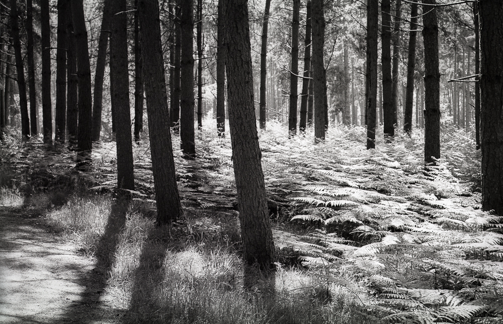 Birches Valley,  HP5+ in LC29 developer.