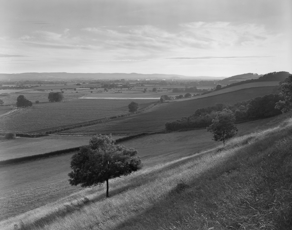 Hillside Tree, Somerset,  Ilford HP5+ in LC29 developer.