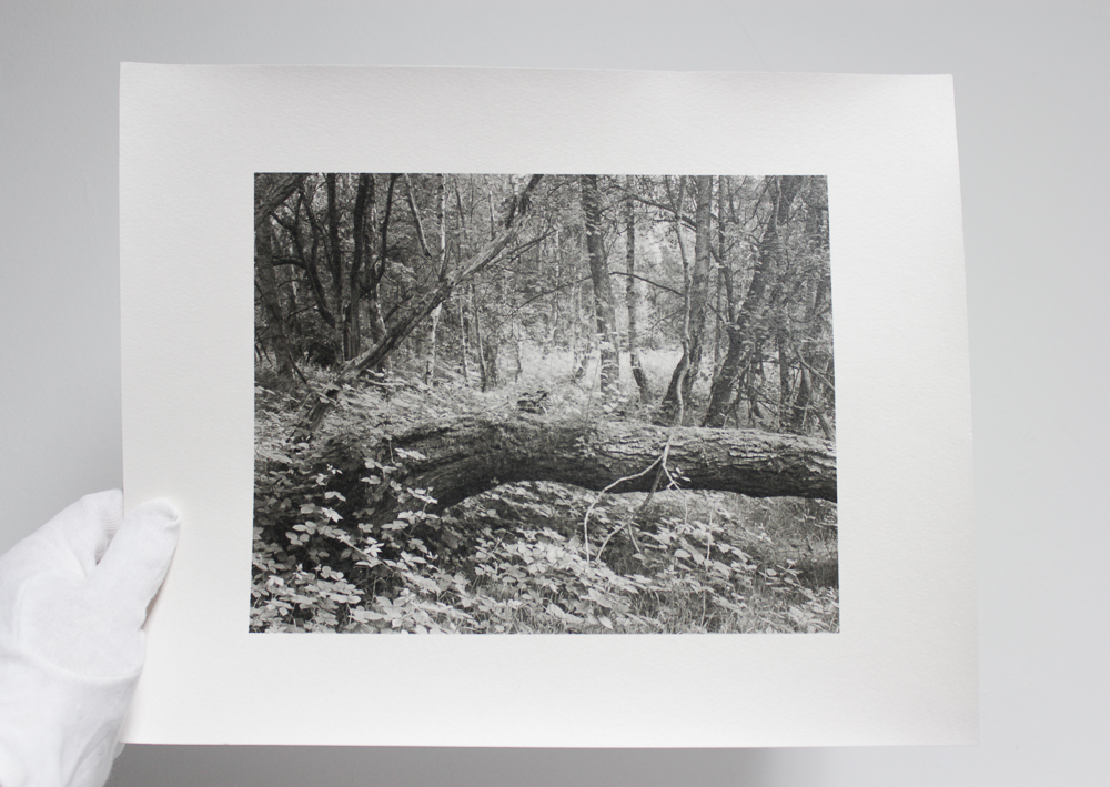 My  Fallen Tree  image on Ilford's sumptuous Multigrade Art darkroom paper. A version on fibre based warmtone paper is available in my shop at the time of writing.