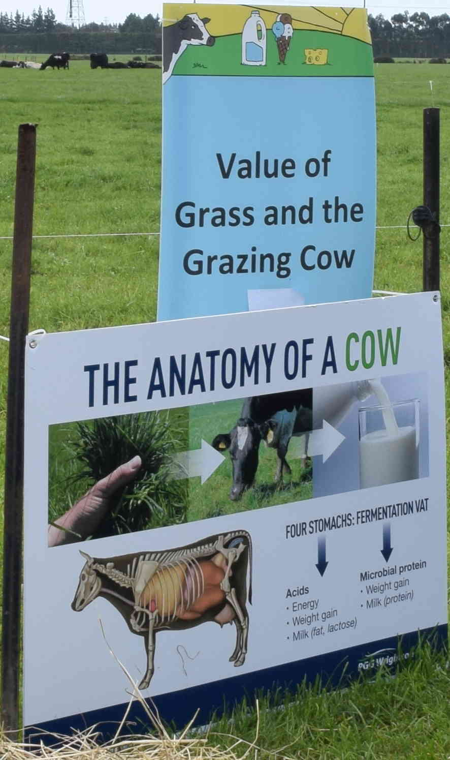 """Grass - the NZ advantage: LUDF informed that ryegrass and clover pasture is one of country's key competitive advantages as it is grown most of the year and tolerates frequent grazing. """"The clover content aids microbial conversion of atmospheric nitrogen to plant proteins,"""" it says."""
