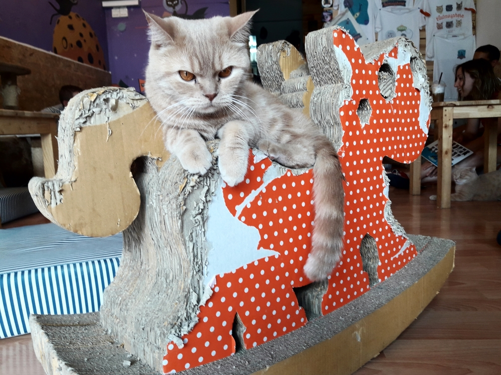 Cat Cafe in Chiang Mai | Wanderlust Movement