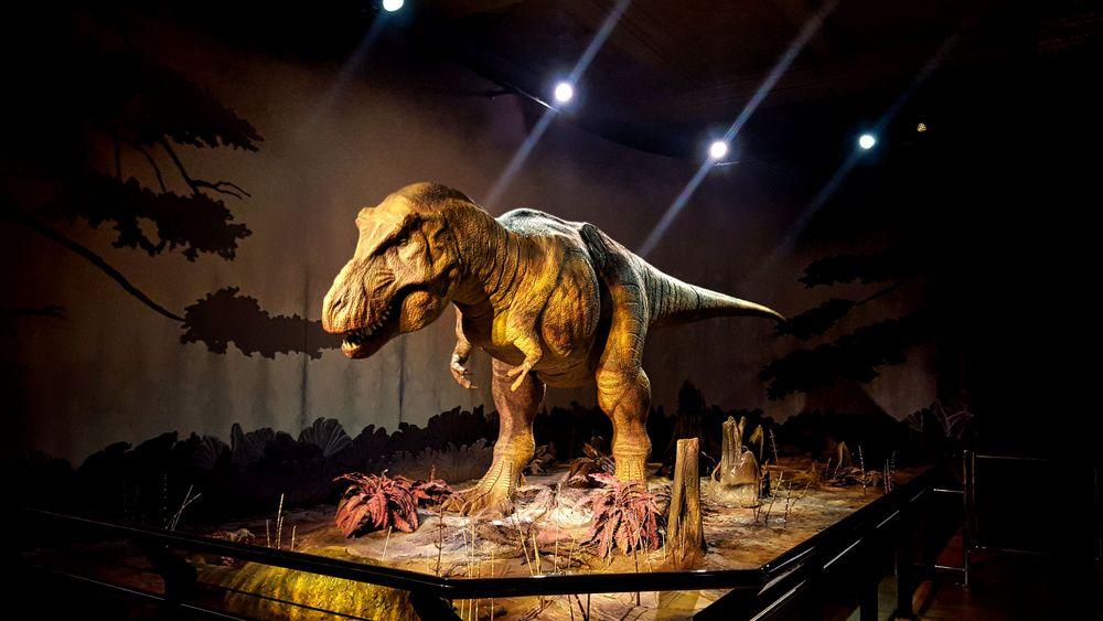 Natural History Museum in London   Wanderlust Movement