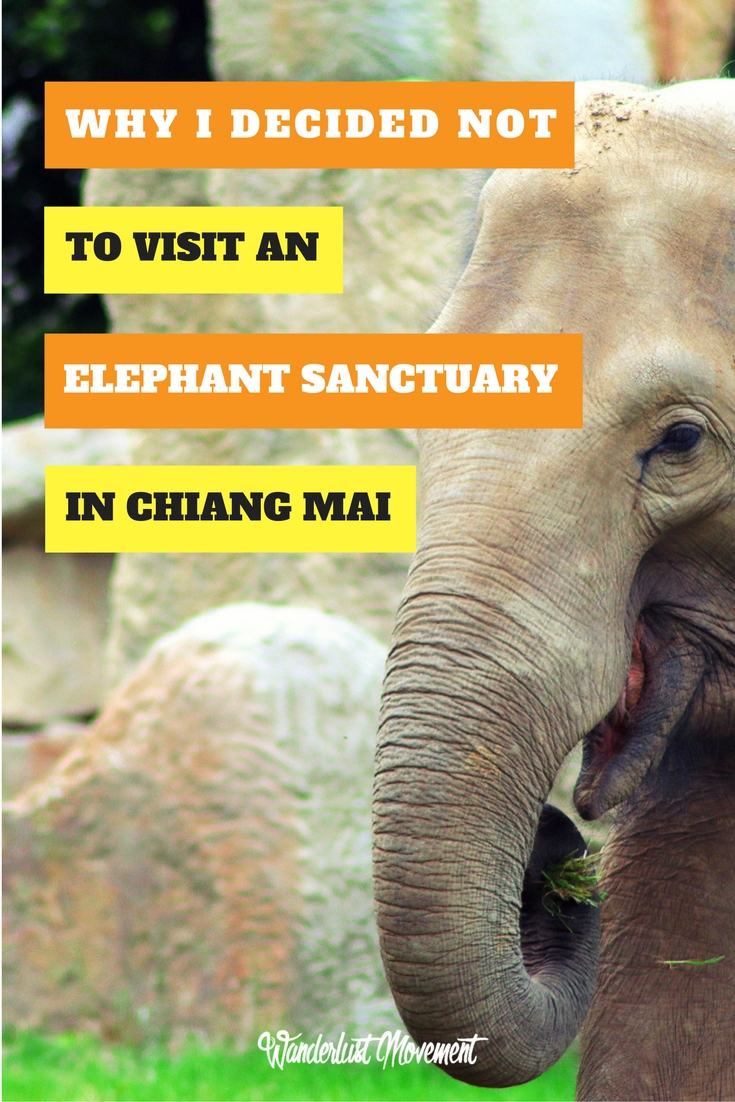 Why I Decided Not To Visit An Elephant Sanctuary in Chiang Mai | Wanderlust Movement