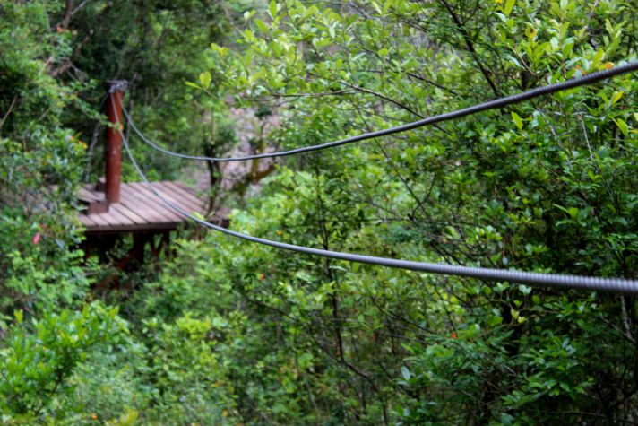 Ziplining canopy tour in Magoebaskloof | Wanderlust Movement