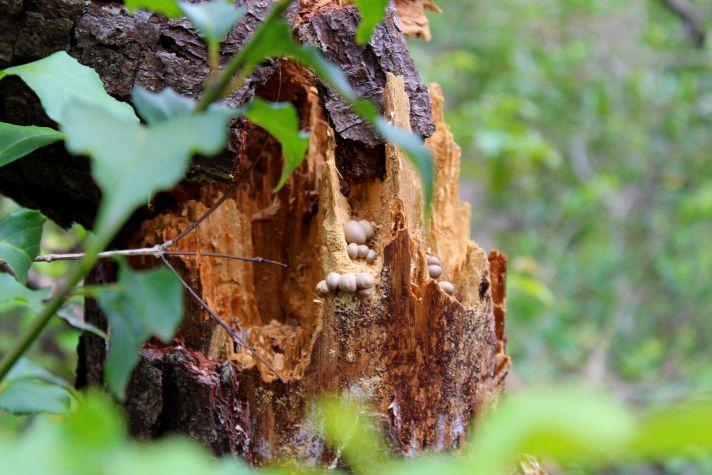 Mushroom details | Wanderlust Movement