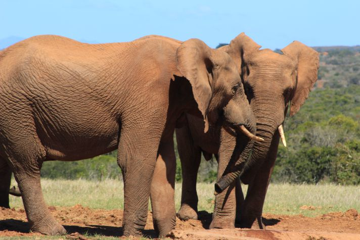 Elephant herd in Addo National Park | Wanderlust Movement