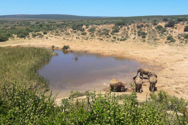 Elephants at watering hole | Wanderlust Movement